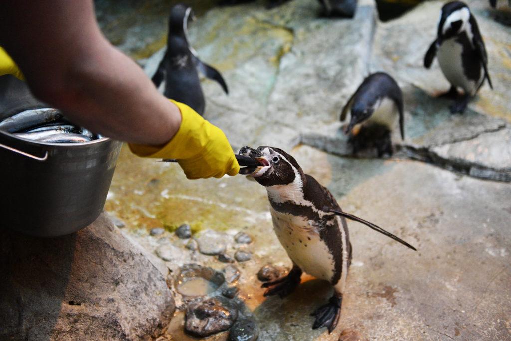 Основы зоопаркового дела