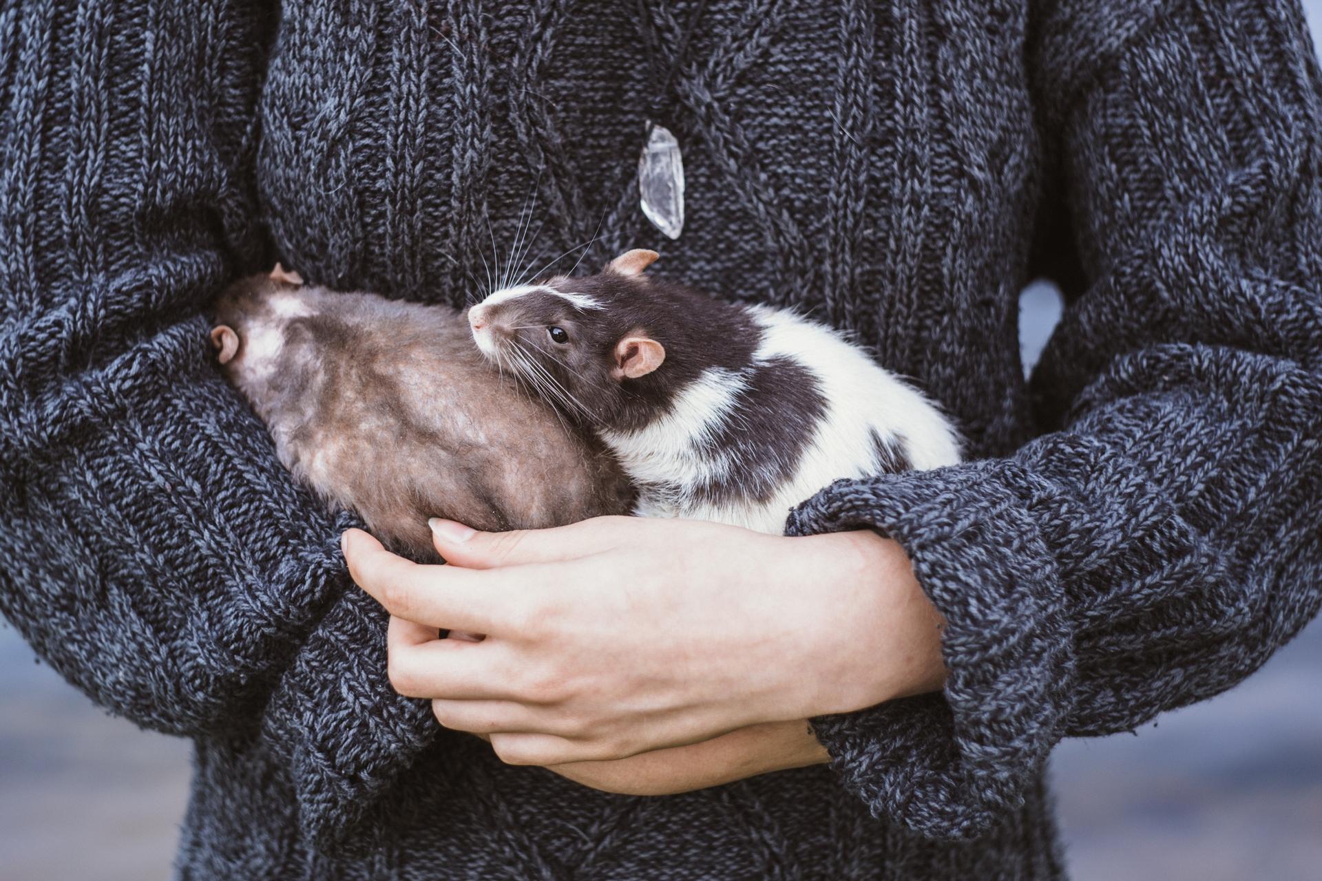 Мелкое млекопитающее в вашем доме