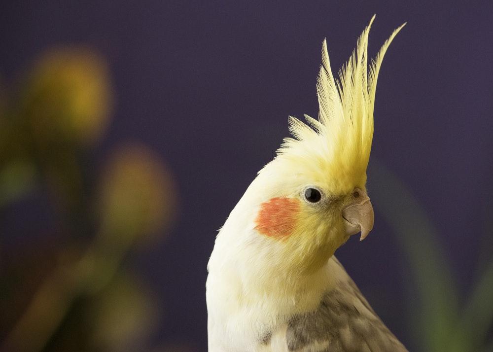 Птицы в вашем доме